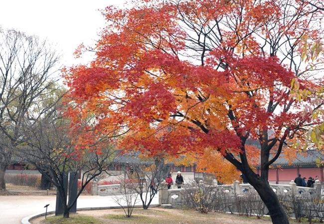韓国絶景世界遺産